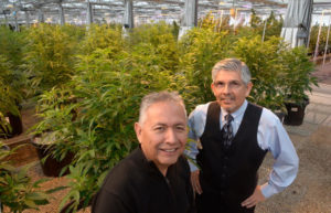 Duke Rodriguez and Leonard Salgado in the Ultra Health growing facility in Bernalillo, New Mexico, photographed on Tuesday December 22, 2015. (Dean Hanson/Albuquerque Journal)