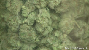 (KRQE/File Photo) buds processed; close-up